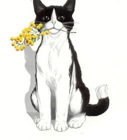 gatto-mimosa