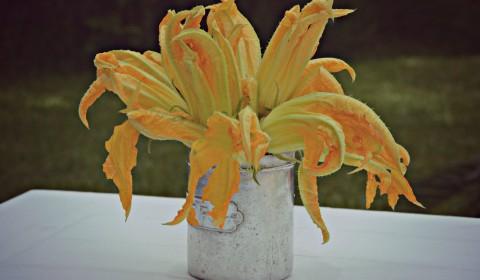fiori di zucca res
