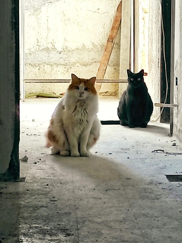 gatti Vinicio e Tabby